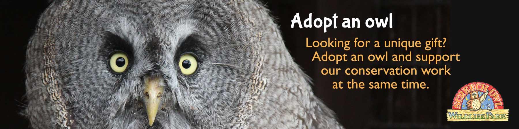home screech owl wildlife park