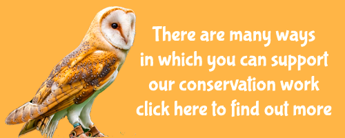 There are many ways in which you can support our conservation work click here to find out more